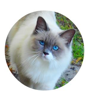 beautiful cat, gorgeous kitty