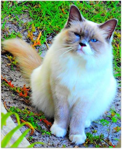 grumpy cat, very grumpy cat, not impressed