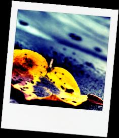 leaf, discard, anxiety
