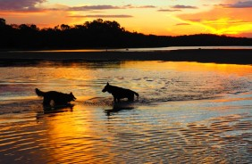 dogs playing, sunset, beautiful, photo, amazing, dogs, puppies, fun