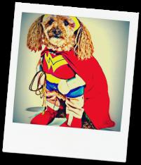WONDER WOMAN, SUPERPOWERS, SUPERHERO