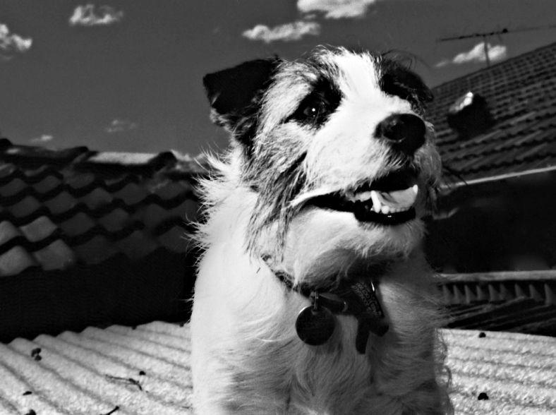 gorgeous dog, funny photo