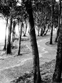the path we chose, the path