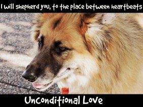 unconditional love, love, puppy, dog,