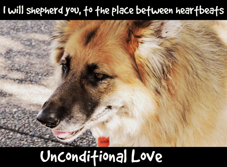 unconditional love, love, puppy, dog,