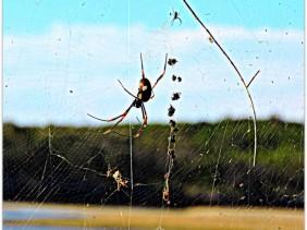 spider, wisdom