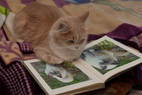 cool kitty, funny, cats reading