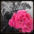 Gratitude, thank you