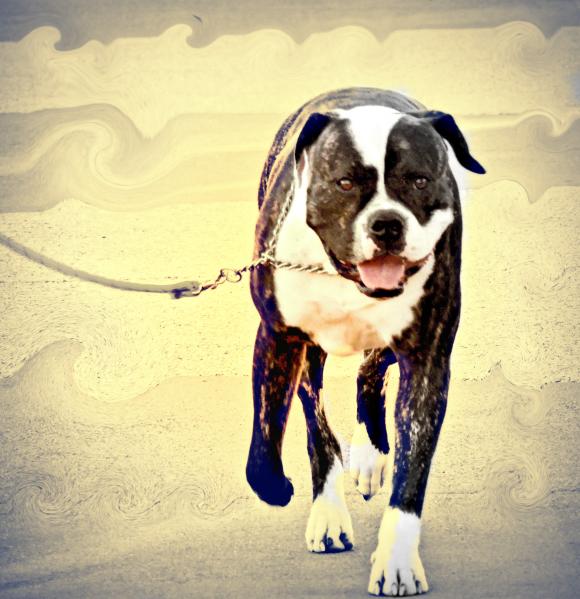 dog, happiness, wonderful, I'm so happy