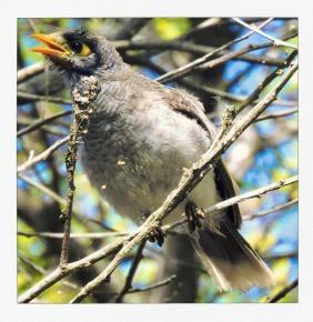 funny, bird, wildlife, he said what?