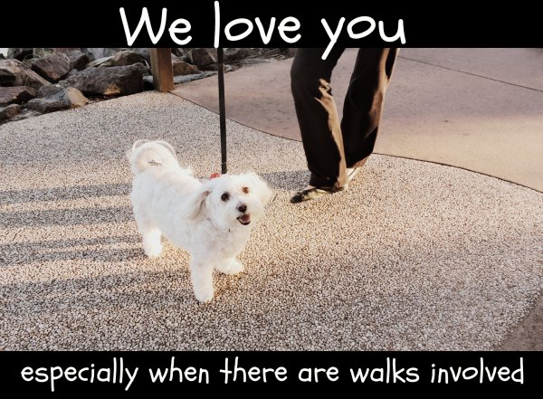 happiness, dogs, fun, love, walking the dog