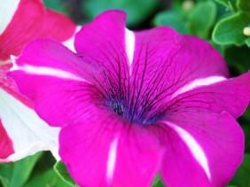 pretty flower, pink
