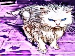 upset kitty