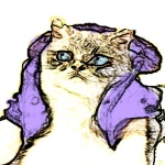 pretty cat, purple leather