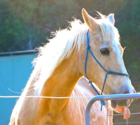 horse, funny,